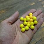 イベント黄色い玉